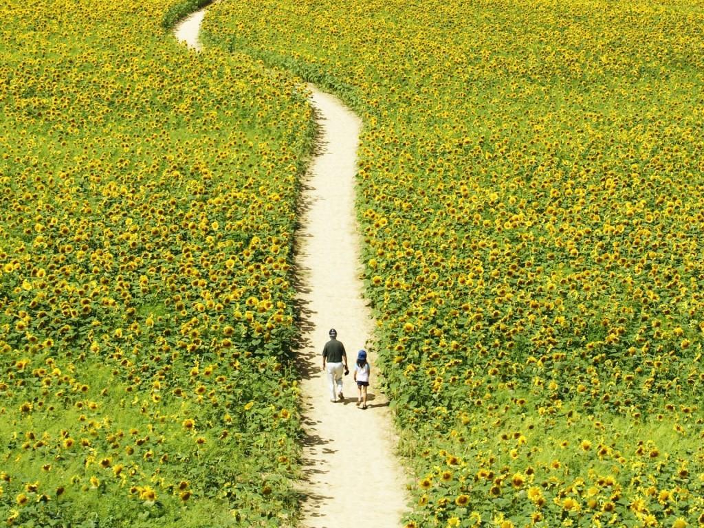 Движение-это жизнь, не упускайте возможность прогуляться пешком.