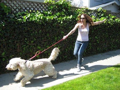 Прогулку с большой собакой можно считать интенсивной тренировкой всех групп
