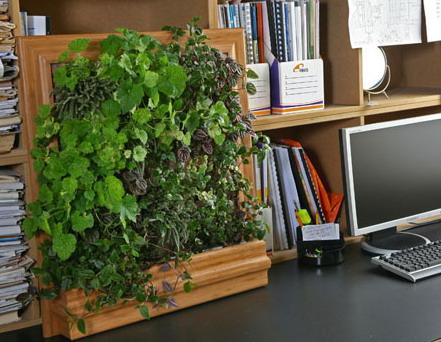 Еще один способ дать отдых глазам на работе- смотреть на цветы. Зеленый цвет очень благотворно влияет на зрение, успокаивает глаза и нервную систему.