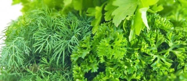 Зимой зелень можно выращивать дома в горшочке
